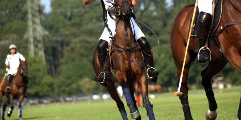 All you need to know about grass polo field maintenance